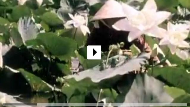Zum Video: Three Seasons