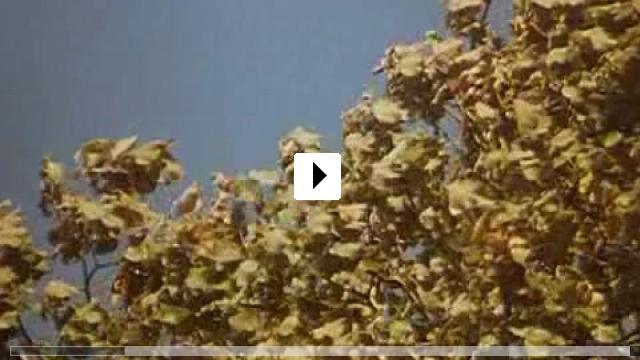 Zum Video: Stille Liebe