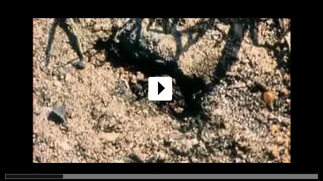 Zum Video: Verführung von Engeln - Kurzfilme von Jan Krüger