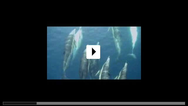 Zum Video: The Last Giants - Wenn das Meer stirbt