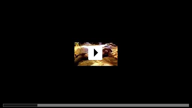 Zum Video: Dr. Dolittle 2