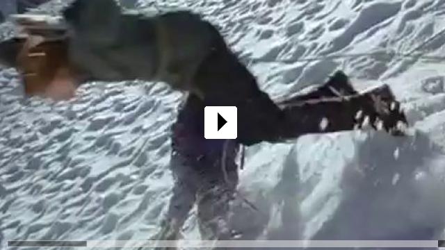 Alaska Die Spur Des Polarbären Stream