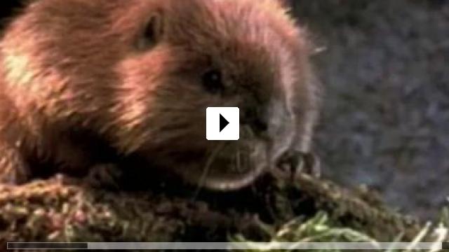 Zum Video: Dr. Dolittle