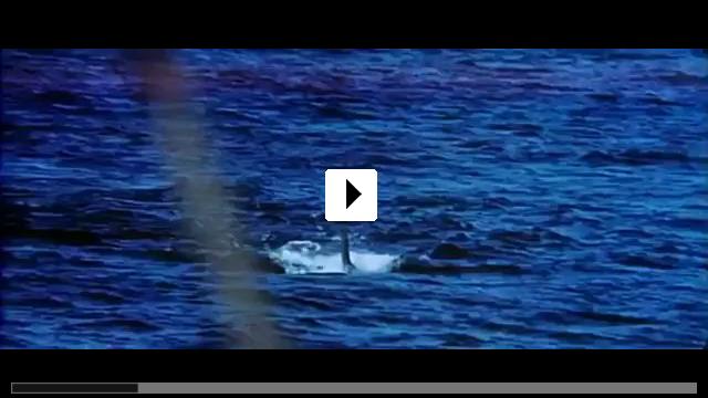 Zum Video: Der weiße Hai