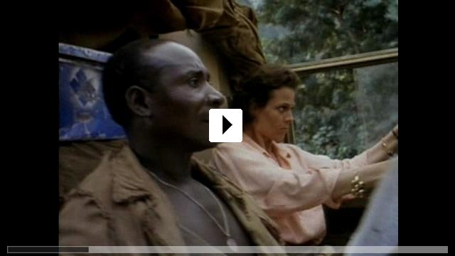 Zum Video: Gorillas im Nebel
