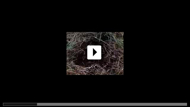 Zum Video: Greenfingers - Harte Jungs und zarte Triebe