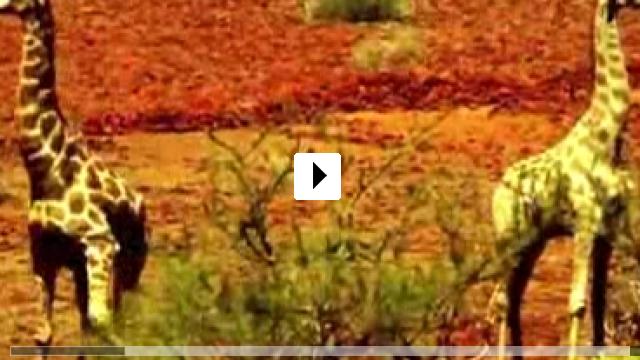 Zum Video: Africa Light - Gray Zone