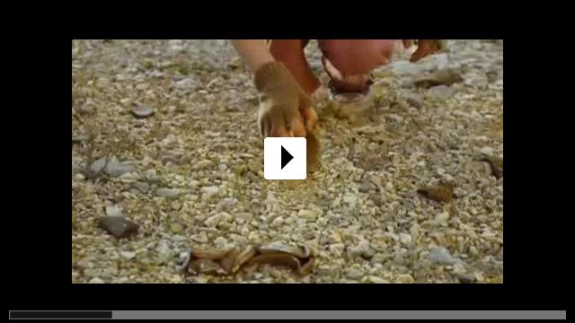 Zum Video: In the Land of Wonders