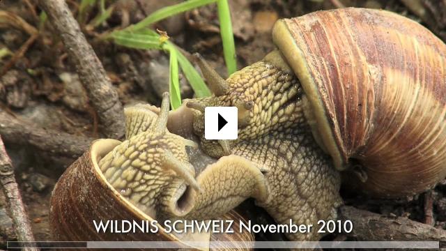 Zum Video: Wildnis Schweiz