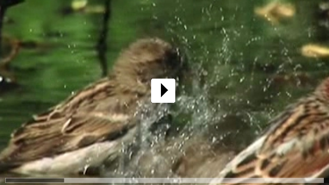 Zum Video: Der Tag des Spatzen