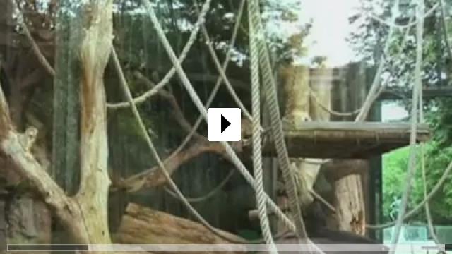Zum Video: Nénette