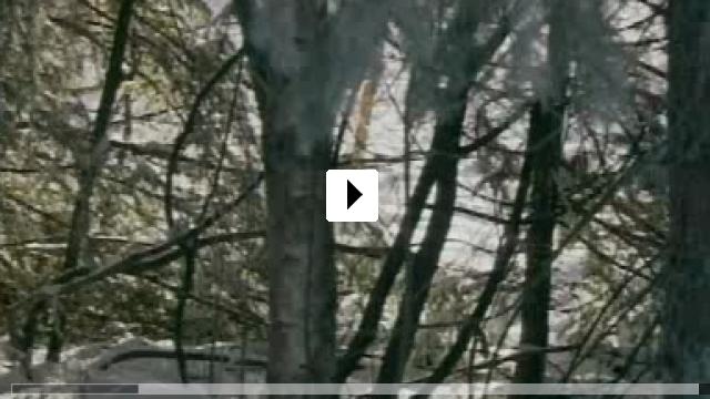 Zum Video: Das Summen der Insekten - Bericht einer Mumie