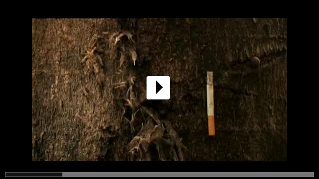 Zum Video: Voodoo - Die Kraft des Heilens