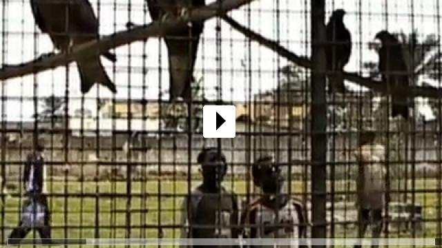 Zum Video: Benda Bilili! - Jenseits des Scheins
