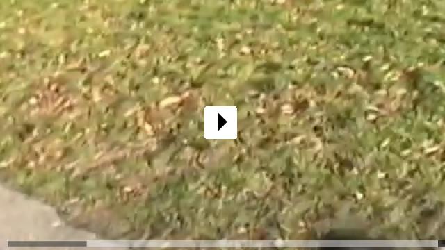 Zum Video: The Kids Grow Up