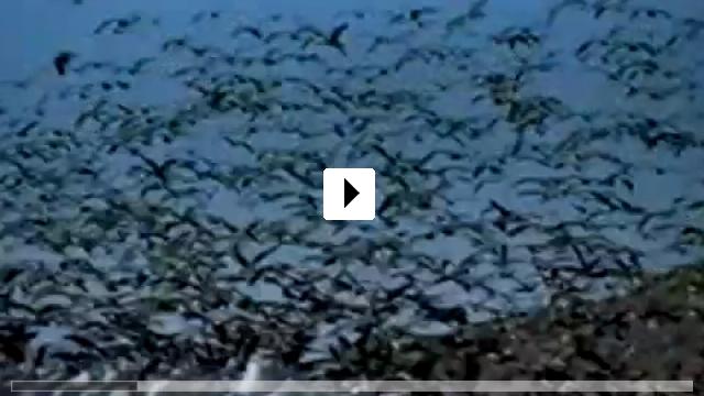 Zum Video: Der Ozean - Wiege des Lebens