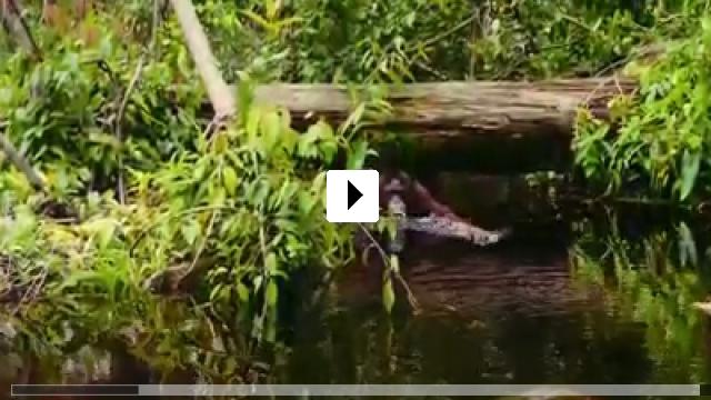 Zum Video: Born to Be Wild