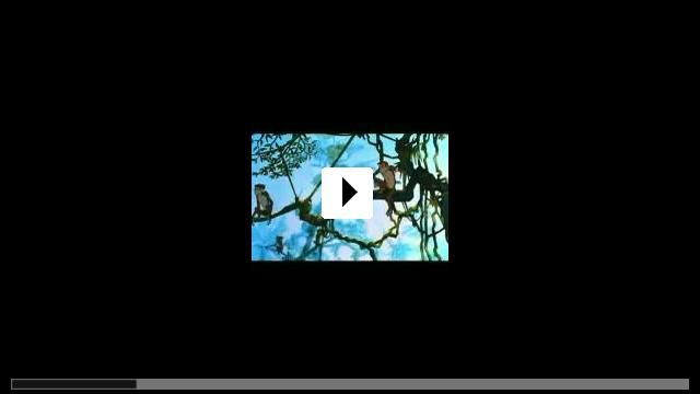 Zum Video: Kwom und der König der Affen