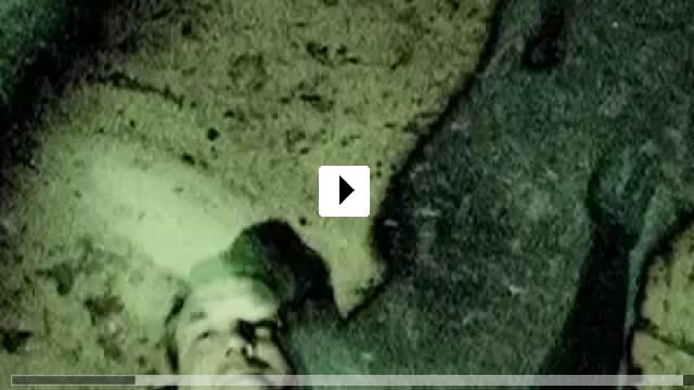 Zum Video: Meat
