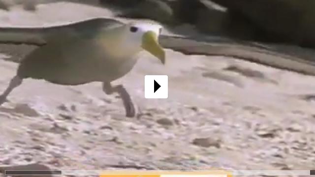Zum Video: Das Leben der Vögel