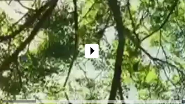 Zum Video: Orange