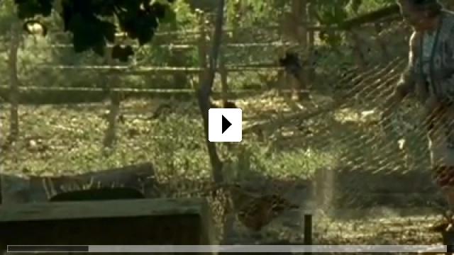 Zum Video: Huacho - Ein Tag im Leben