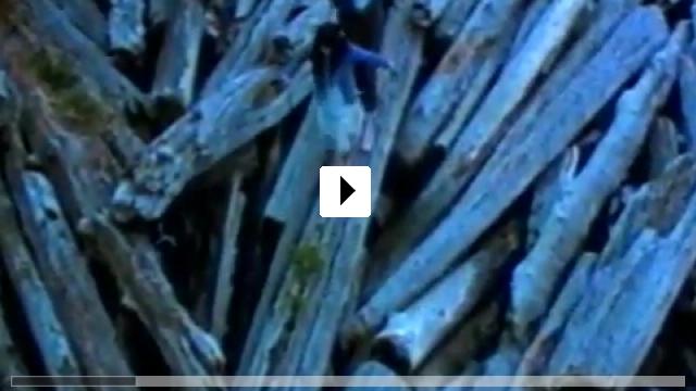 Zum Video: Schnee, der auf Zedern fällt
