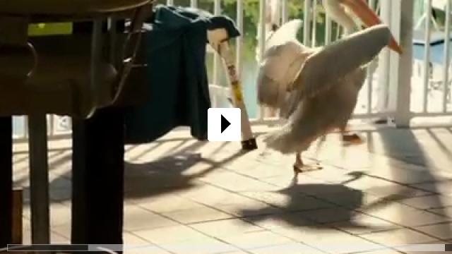 Zum Video: Mein Freund der Delfin