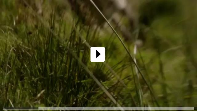 Zum Video: The Arbor