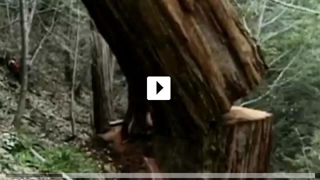 Zum Video: If A Tree Falls