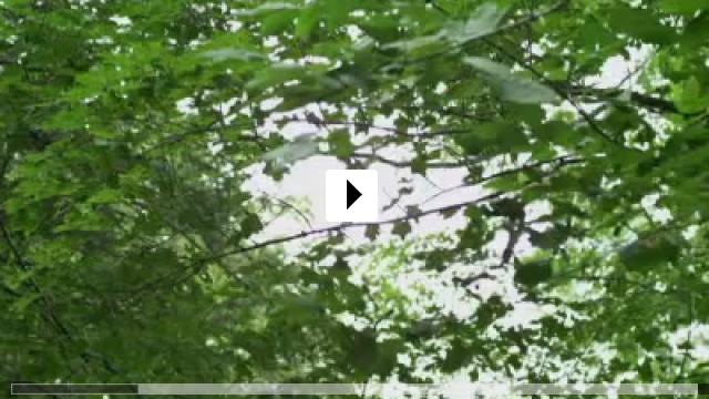 Zum Video: Grave Encounter