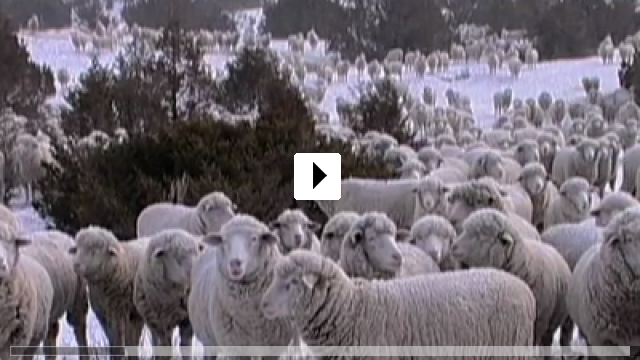 Zum Video: Sweetgrass