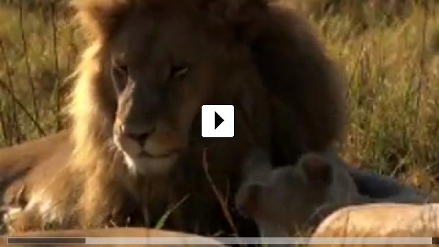 Zum Video: Der weiße Löwe
