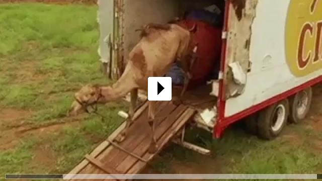 Zum Video: Circo