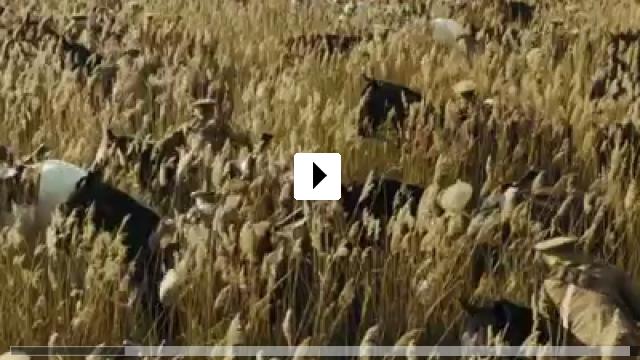 Zum Video: Gefährten