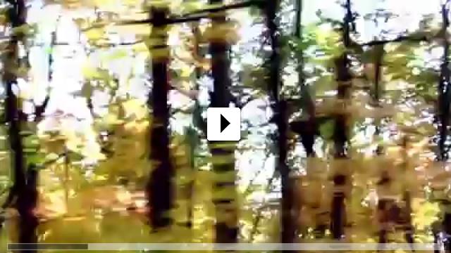 Zum Video: Walk Away Renee