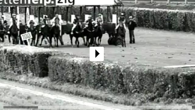 Zum Video: Von Hunden und Pferden