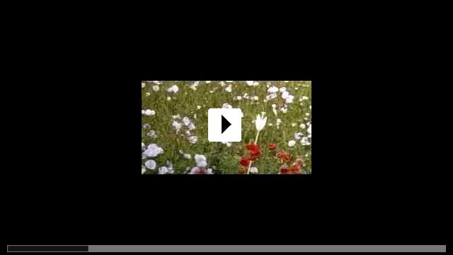 Zum Video: Ein Sommernachtstraum