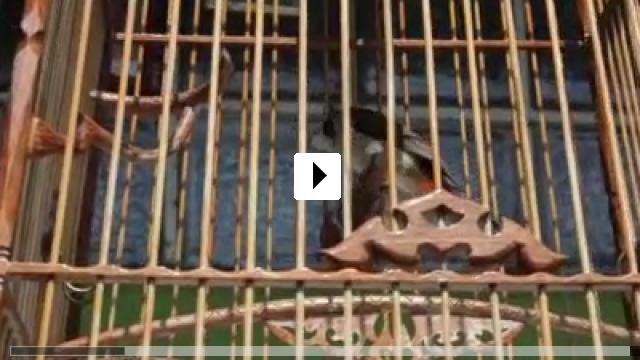 Zum Video: The Dream Cages