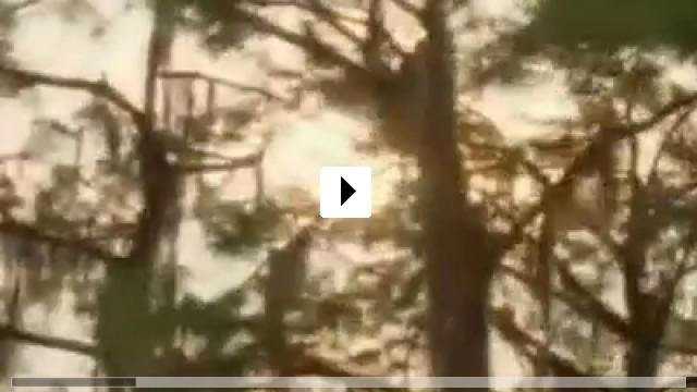 Zum Video: Hai Attack