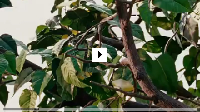 Zum Video: Noch tausend Worte
