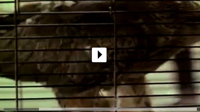 Zum Video: Lärm und Wut