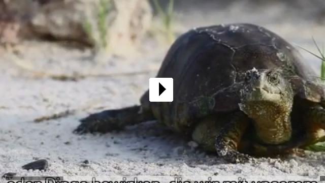 Zum Video: Unter Wasser atmen - Das zweite Leben des Dr. Nils Jent
