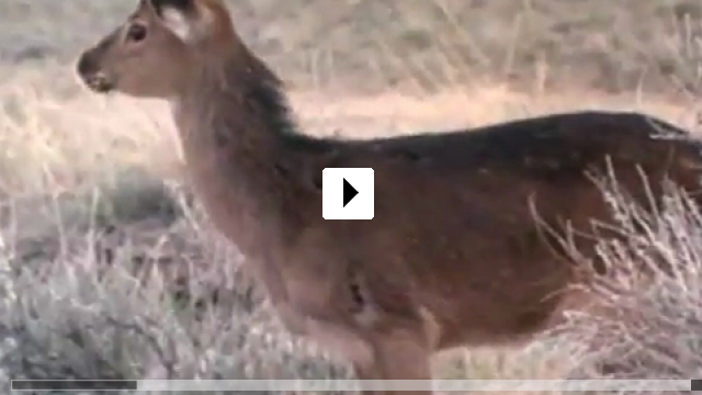 Zum Video: Wild America