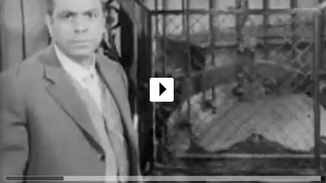 Zum Video: Bei Oscar ist 'ne Schraube locker