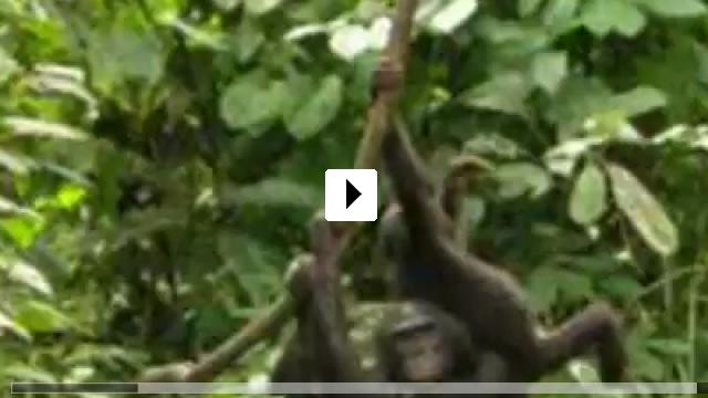 Zum Video: Benny - Allein im Wald