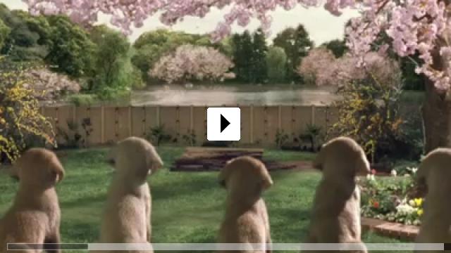 Zum Video: Ein Hund namens Quill